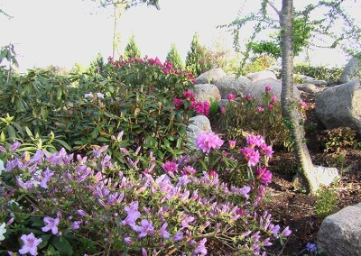 Rhododendron (13)