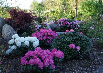 Rhododendron (17)