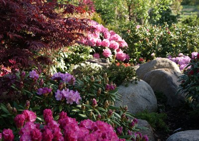 Rhododendron (19)