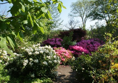 Rhododendron (27)