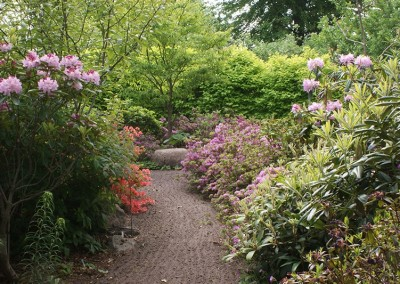 Rhododendron (32)