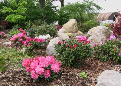 Rhododendron (9)