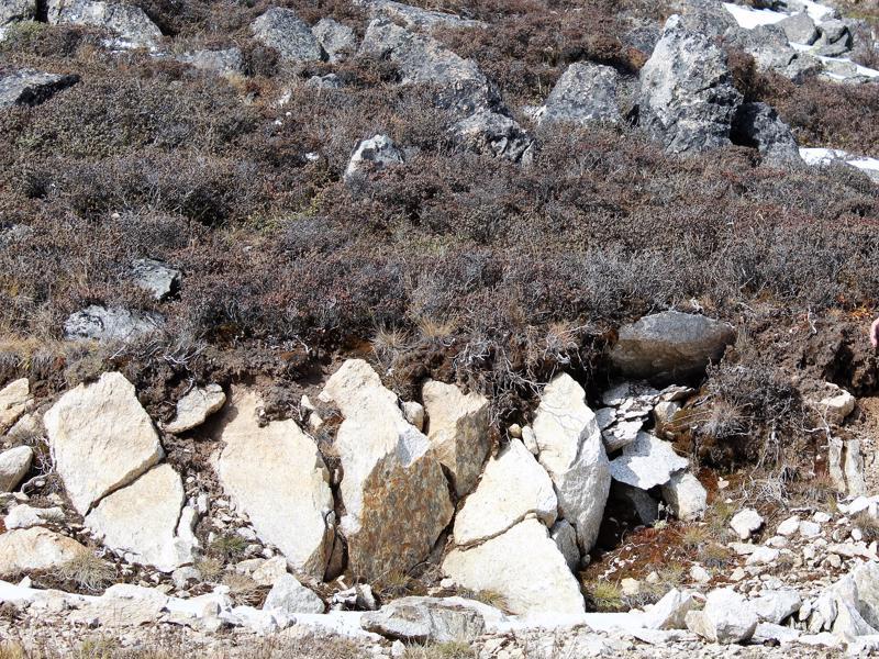 Rh. nitidulum var. nitidulum, Kangding, 4400 m